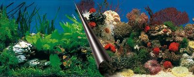 Europet foto achterwand stone+coral